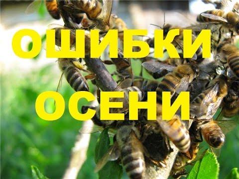 Осенние ошибки пчеловода.