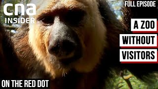 Inside The Singapore Zoo During COVID-19 Lockdown | On The Red Dot | Inside A Zoo