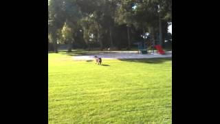 Harry Pywell Dog Training - Go To Marker 3