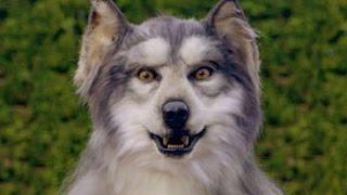 Animatronic Werewolf Head for Auction (by Clockwork Creatures)