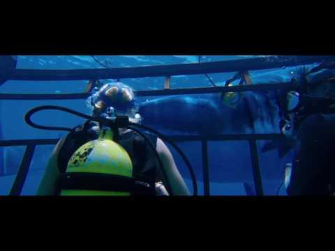 A 47 metros - Trailer español (HD)