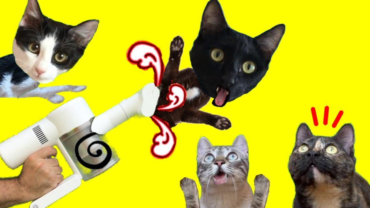 Gatos Luna y Estrella limpiando la casa en Lola es Reina 24h / Videos de gatitos chistosos