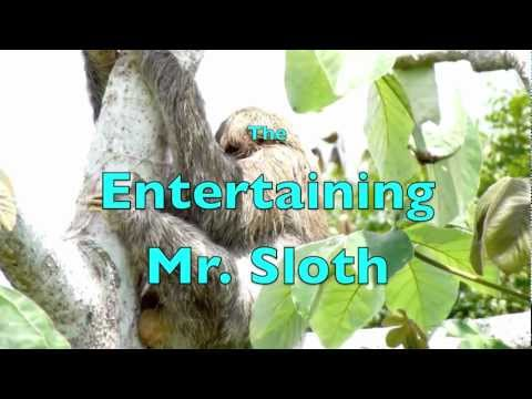 The Entertaining Mr Sloth