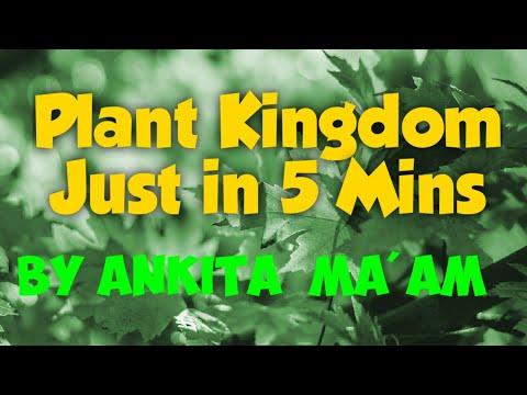 Plant kingdom easy