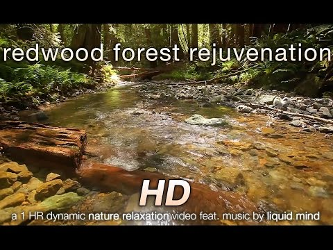 """Redwood Forest Rejuvenation"" w LIQUID MIND Music 1 HR Nature Relaxation Video HD 1080p"