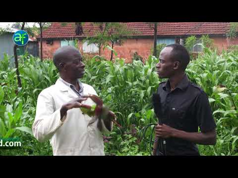 Arable Africa -organic farming