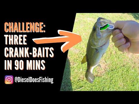 REBEL Wee Grasshopper CRUSHES BASS In Crank Bait Fishing Challenge