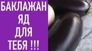 БАКЛАЖАНЫ -ЯД ДЛЯ ТЕБЯ !!!