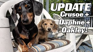 live-update-with-crusoe-daphne-and-oakley