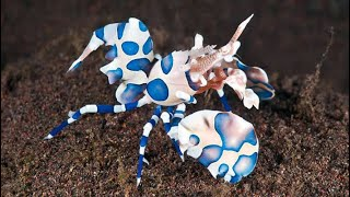 10 Most Beautiful Shrimps in the World