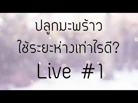 ปลูกมะพร้าว ใช้ระยะห่างเท่าไรดี? Live #1