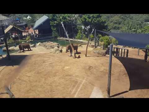 Full Video Sydney Taronga Zoo Sky Safari overlooking elephants