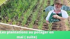 Les plantations du mois de mai au potager(suite)