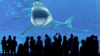 Warum der Weiße Hai in keinem Zoo der Welt existiert