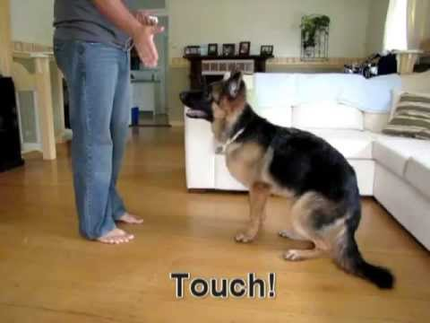 German Shepherd tricks and playing Hide & Seek