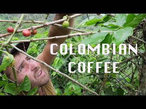 Colombian Coffee | The process of the coffee in an organic Colombian farm