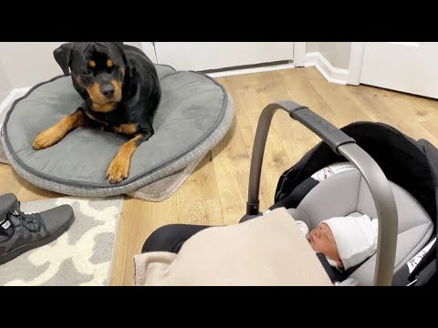 Rottweiler Bruno meeting his baby Sister! |55