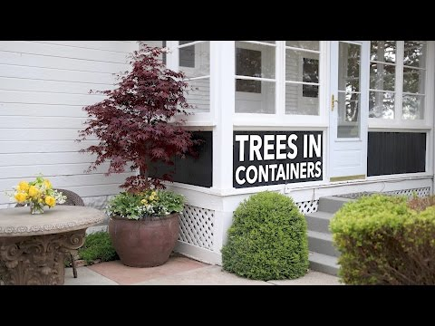 Can I Plant a Tree in a Container? // Garden Answer