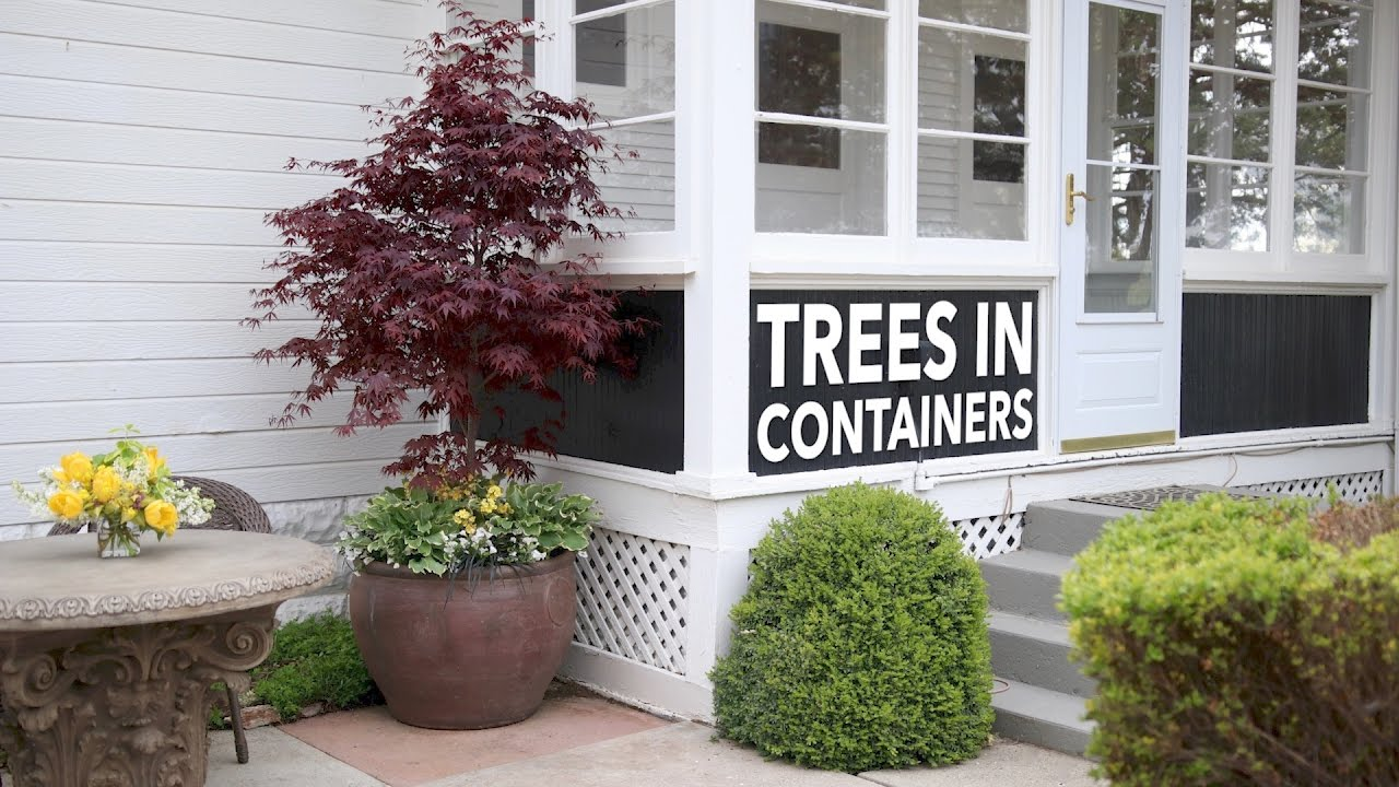 Can I Plant A Tree In Container Garden Answer