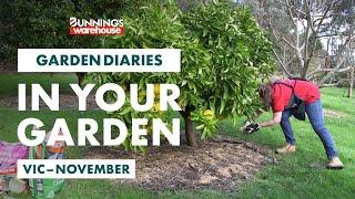 Gardening in November | Victoria | Bunnings Garden Diary