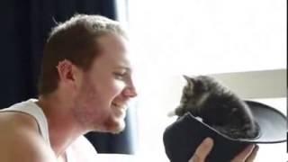 Очень смешное видео про котенка 1