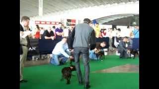 Zudhell Xxiv Exposición Nacional Canina De  Tenerife 2011,staffordshire Bull Terrier