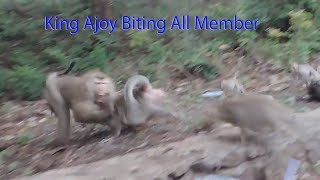 Terrible Wrong Jealous Old King Ajoy Biting All Member In Group/ How New King Vaky Warning Ajoy  ?