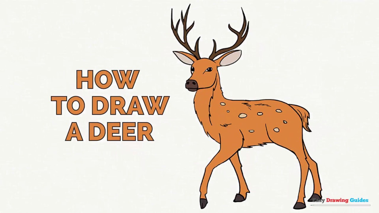 how to draw a deer in a few easy steps drawing tutorial for kids and beginners