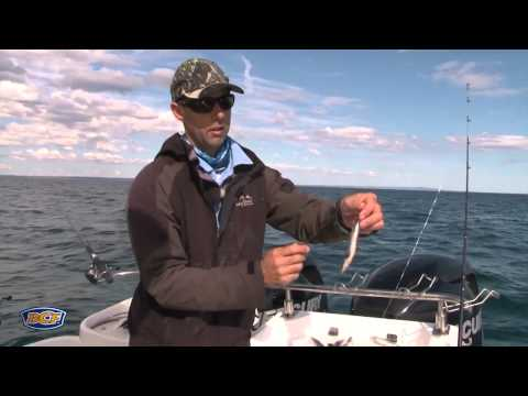 How To Catch Snapper (Bait) - Fishing - BCF