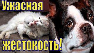 Ужасная Жестокость/Погром в Мурманском приюте/Мурманский приют для животных/Жестокость с животными
