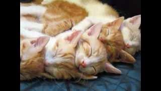 Sleepy Cats Compilation ... Soooooo Cute!