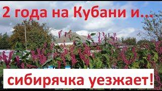 Сибирячка уезжает с Кубани?!