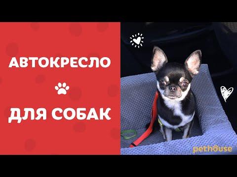 АВТОКРЕСЛО для собак Harley&Cho | Обзор от Pethouse.ua