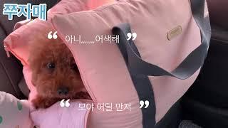 후기-강아지용 카시트,…