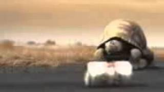 La tortuga brahma