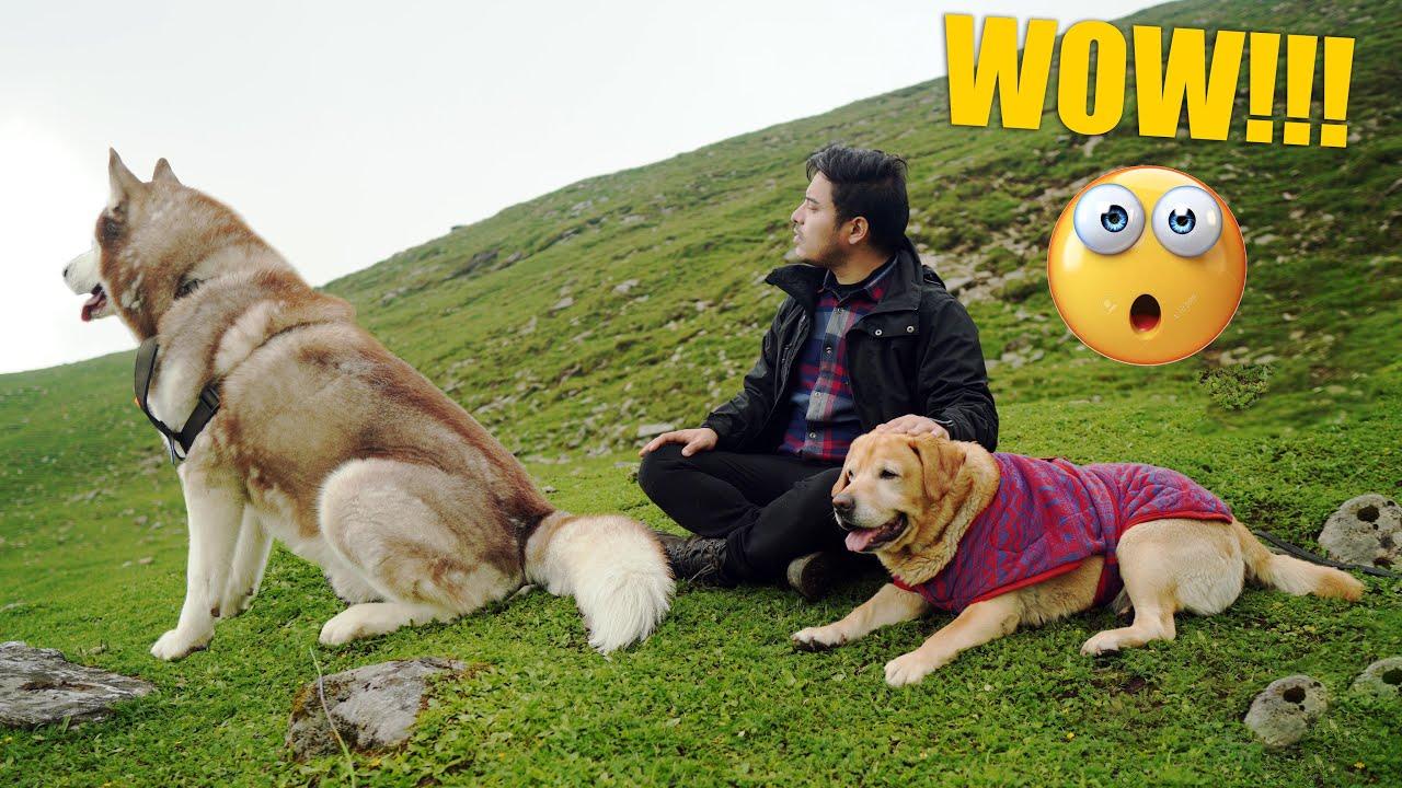 REDEMPTION | KHULIYA TOP!!! | THE HIMALAYAN HUSKY