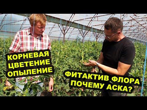 Новые гибриды томатов и технология Фитактив часть 1. Новая  блочная теплица 10 соток.