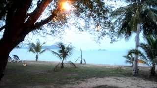 Cicada Tree Cricket | Relentless Sound of Nature in Thailand