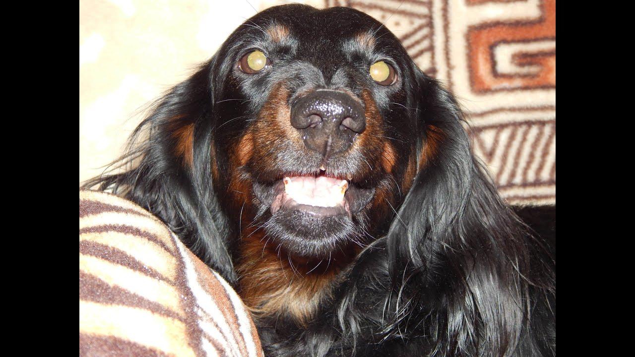 собака улыбака фото приколы