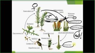 Размножение мха. ОГЭ. ЕГЭ. Биология.