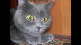 моя кошка няшка.смотрите новое видео