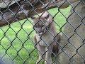 The Phillips Park Zoo in Aurora IL
