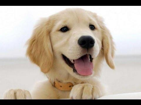 Interpretar sueños - Significado de soñar con perros o un perro