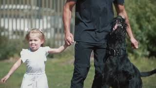 Hector the Giant Schnauzer Family Protection Dog