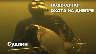 Судаки Подводная охота на Днепре