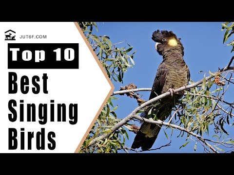 Birds Singing - Top 10 Best Singing Birds In The World