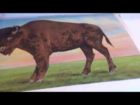 Buffalo New York Souvenir Folder
