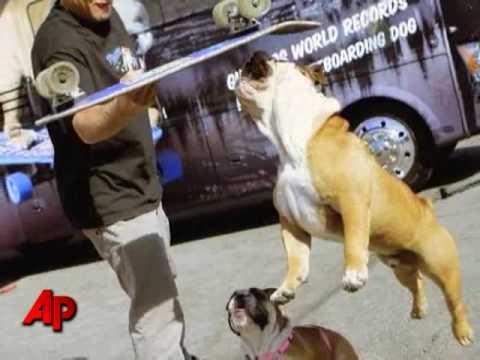 Soon on Parade: Tillman the Snowboarding Bulldog