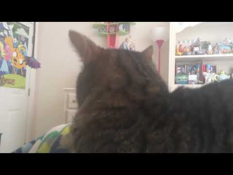 Singing Hallelujah to my cat