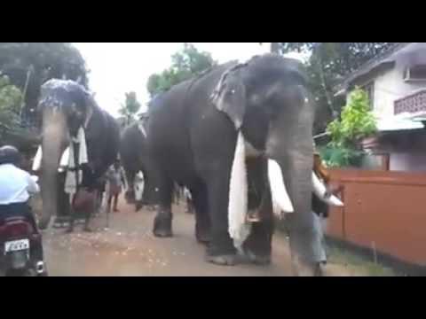 Buddhism in Sri Lanka as we vehemently oppose ayyyoooooooooooooooooooooooooooo